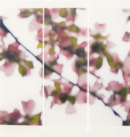 Dogwood (Pink) No. 5 by Jeri Eisenberg